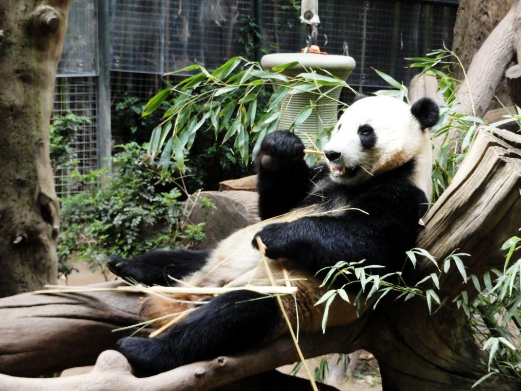Pandy w San Diego