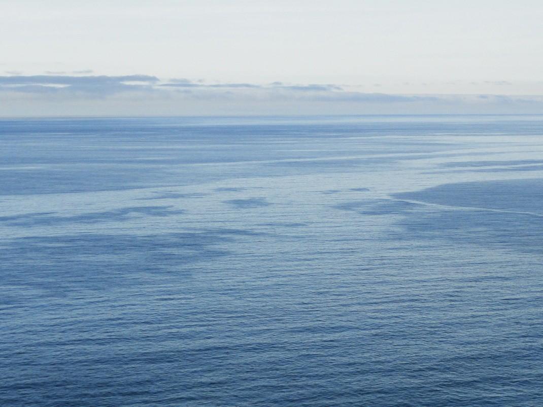 Tędy pływają wieloryby