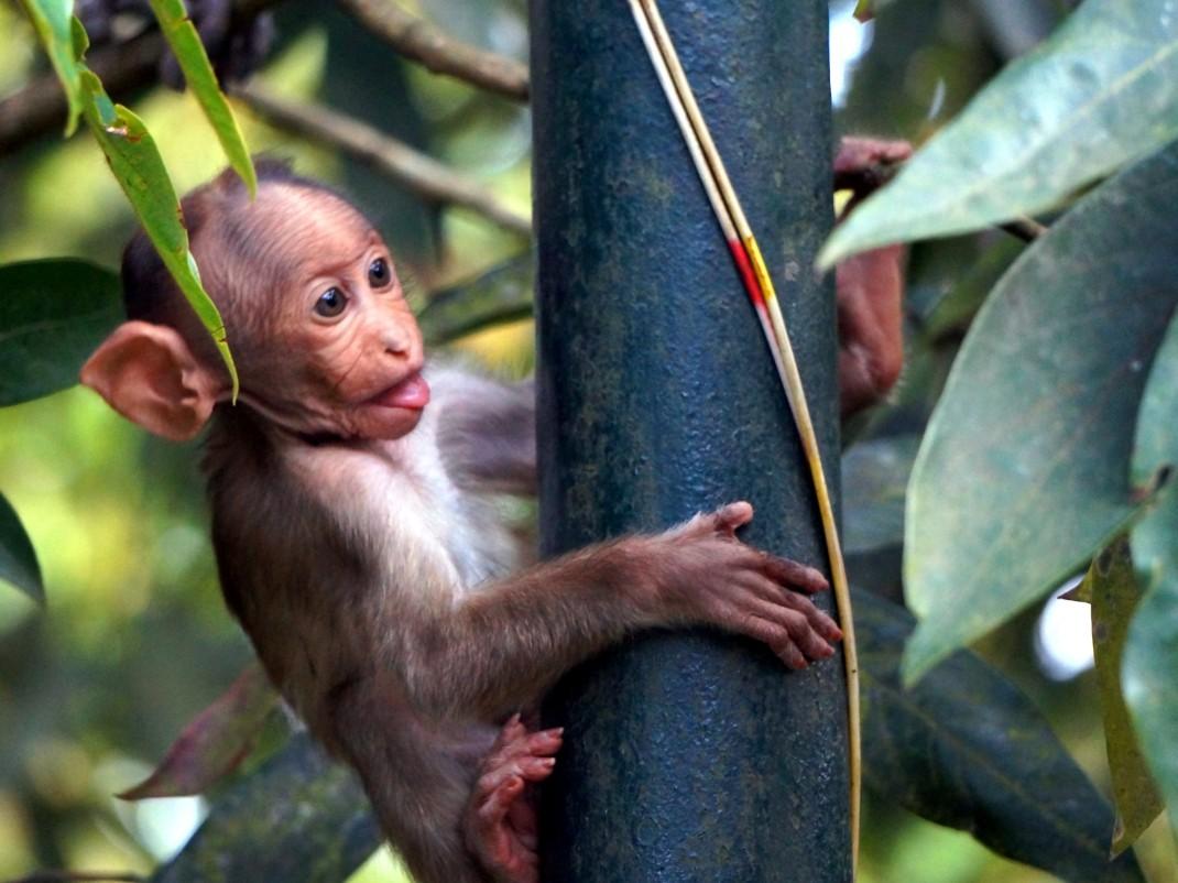 Najdziksze zwierzęta Kerali