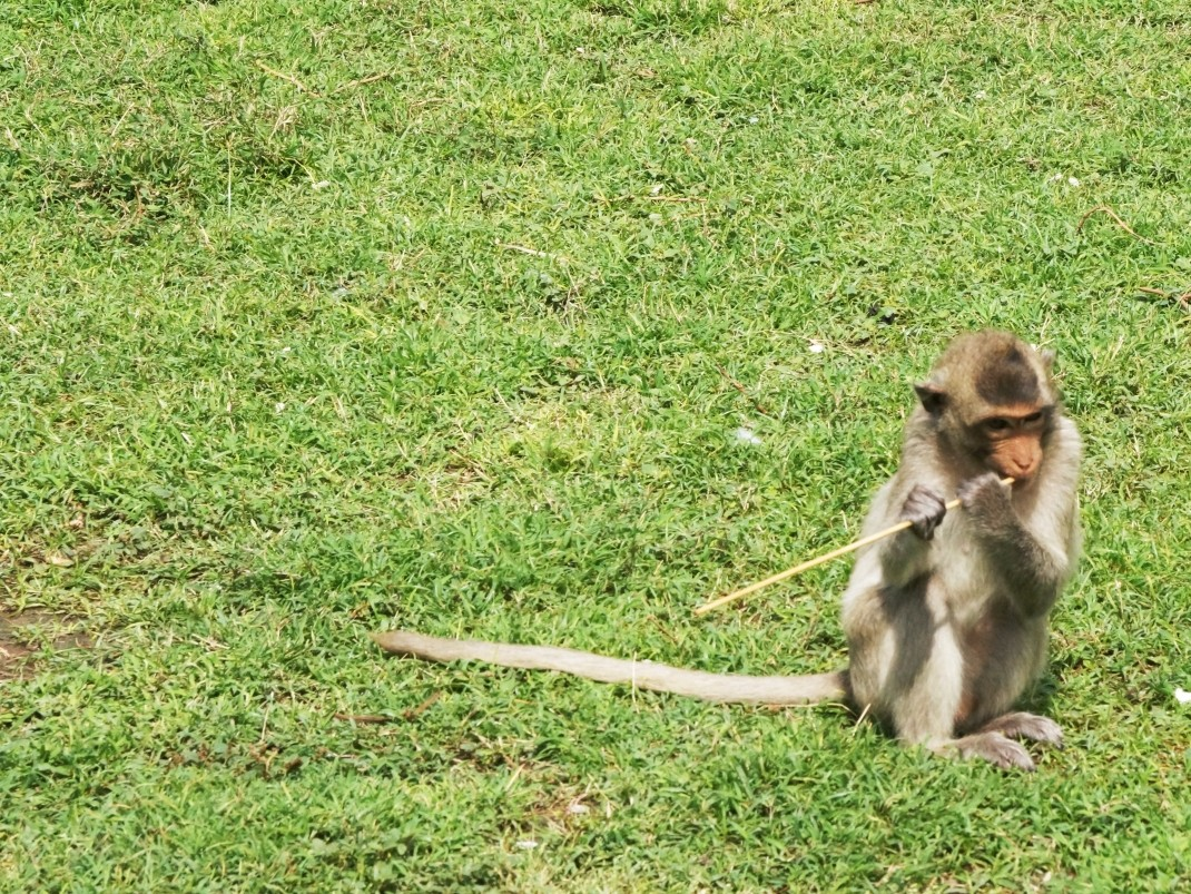 Lopburi - miasto małp
