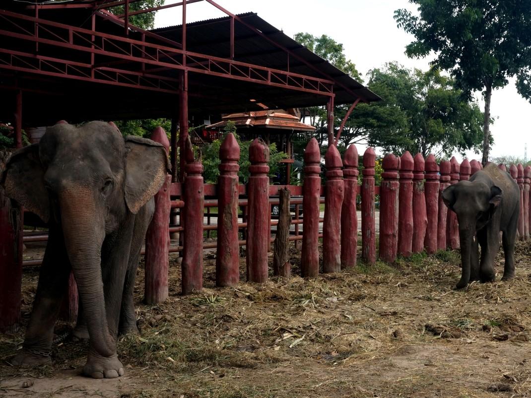 Royal Elephant Kraal, Ayutthaya, Tajlandia