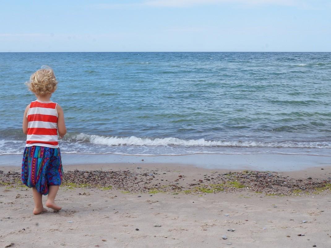 Kalina na bałtyckiej plaży