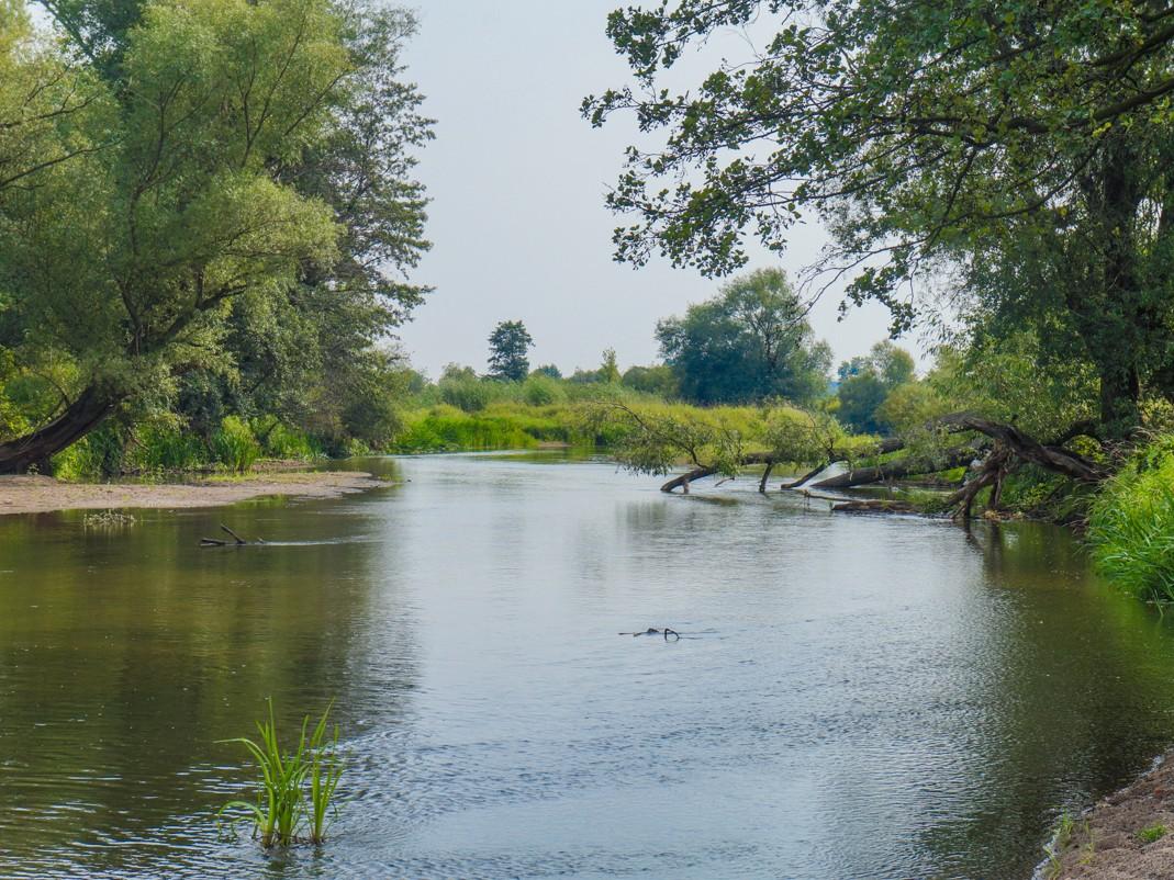 Pilica. Spływ kajakowy