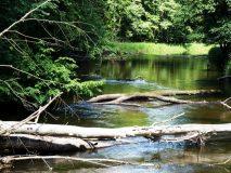 Drawieński Park Narodowy. Rzeka Drawa