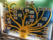 Drzewo genealogiczne świata organicznego