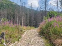 Tatrzański Szlak