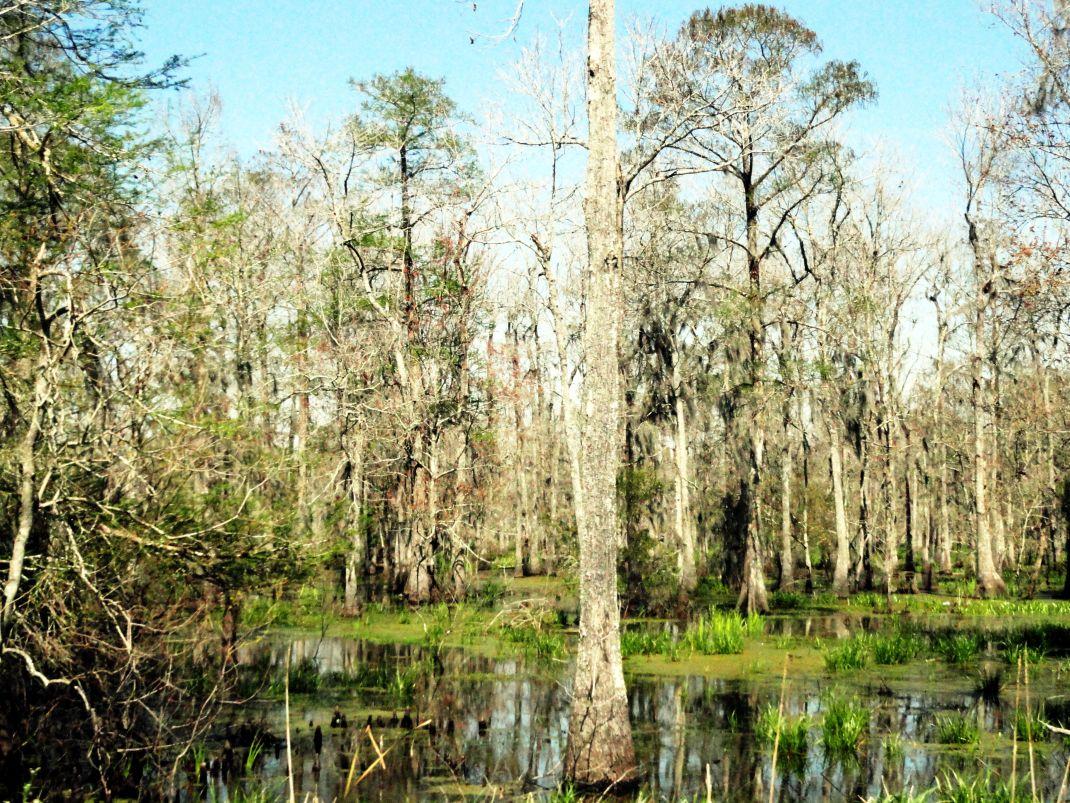 Luizjana. Z plantacji do Nowego Orleanu