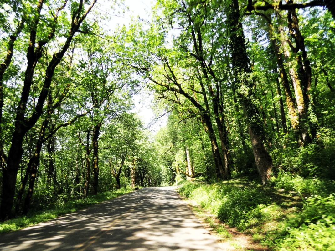 Zielone drogi Oregonu