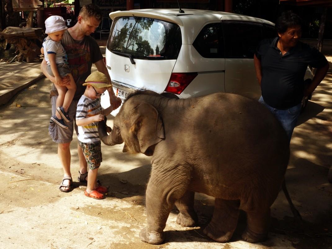 słoń, Royal Elephant Kraal, Ayutthaya, Tajlandia