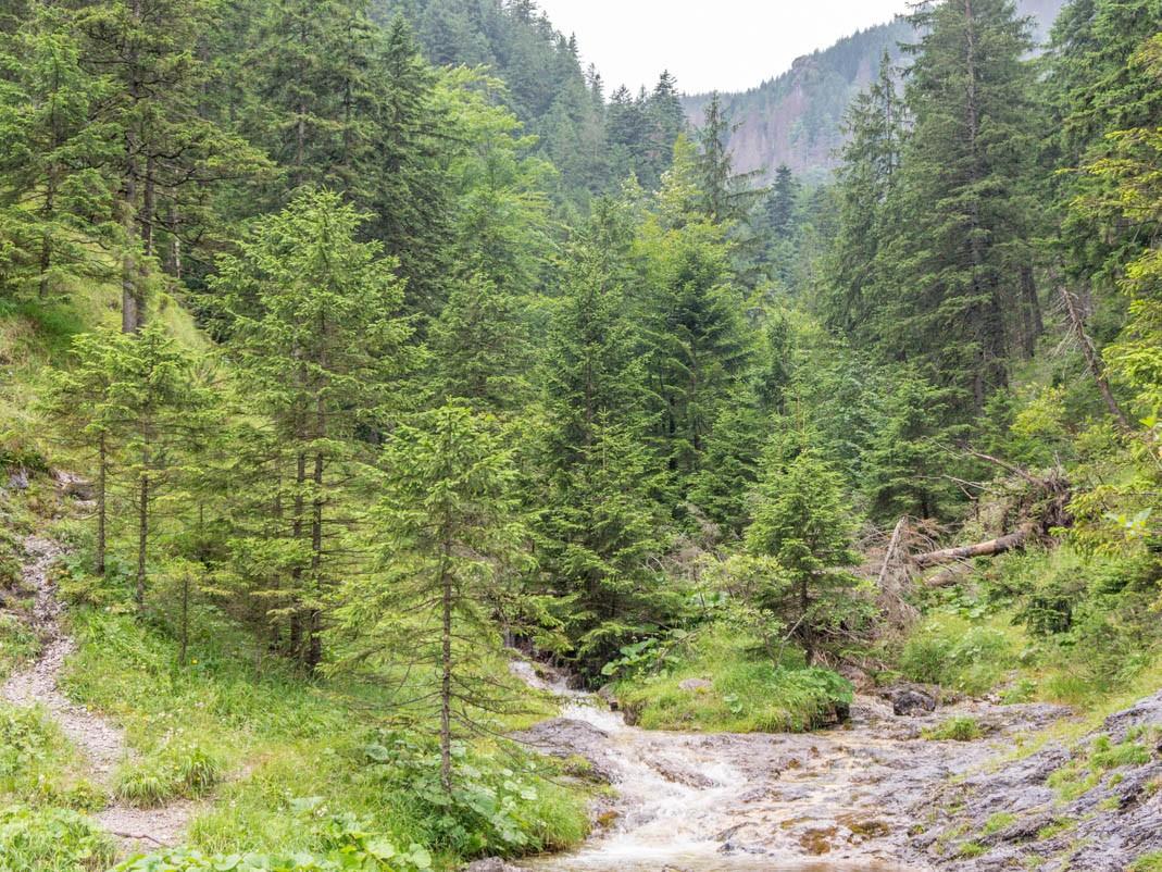 Tatry z dziećmi: Dolina Białego i Dolina Strążyska