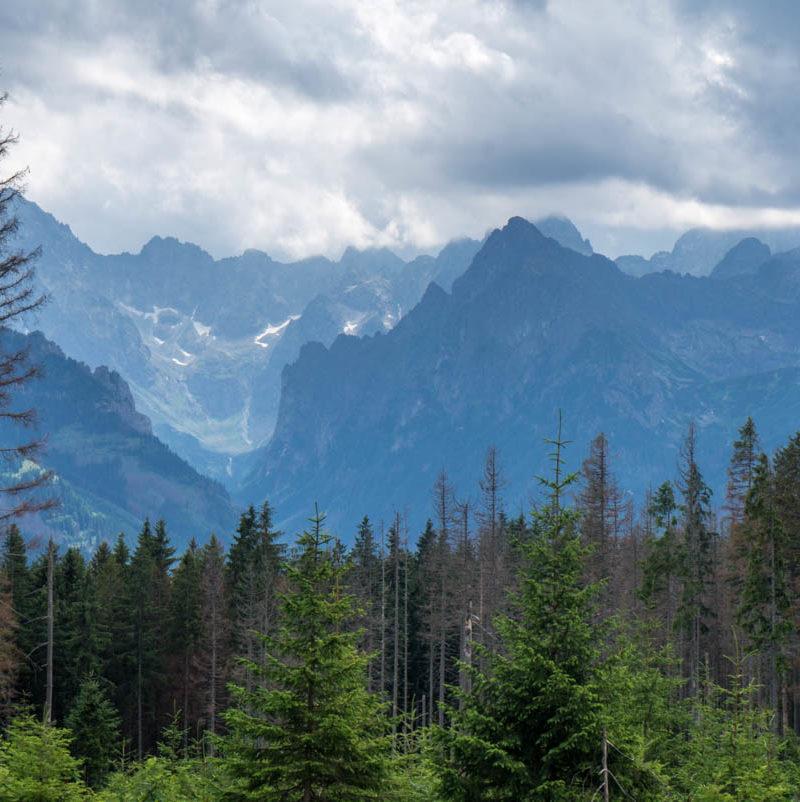 Rusinowa Polana. Nasz ulubiony rodzinny szlak w Tatrach